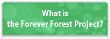 What is the Forever Forest Project?