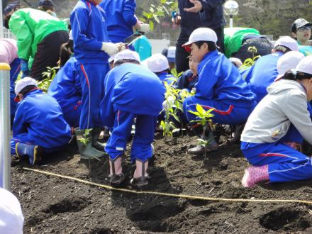 植樹する大槌学園4年生