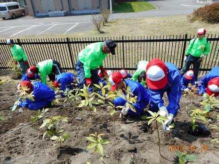 大槌学園の生徒と植樹指導をする横浜ゴム社員